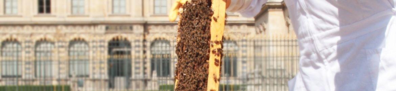 Nuxe e il Louvre per la salvaguardia delle api